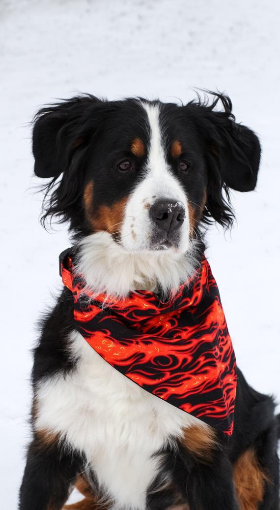 Fire Dog Bandana Cool Dog Collar Bandana Flames Dog Bandanna
