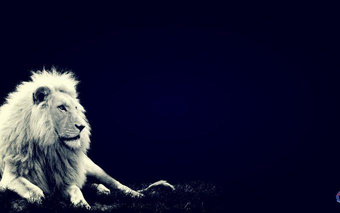 White Lion Full Hd Wallpapers 1080p Gallery Full Hd Wallpaper Hd Wallpapers 1080p Hd Wallpaper