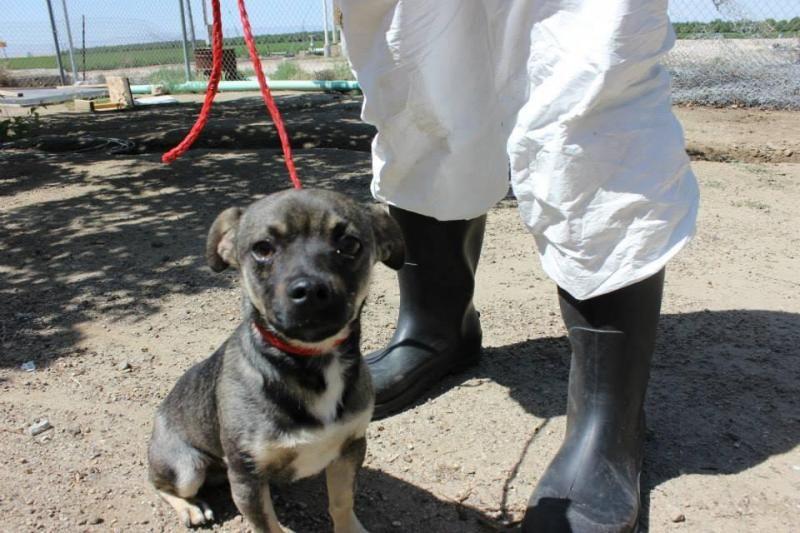 White german shepherd puppies for sale in missouri