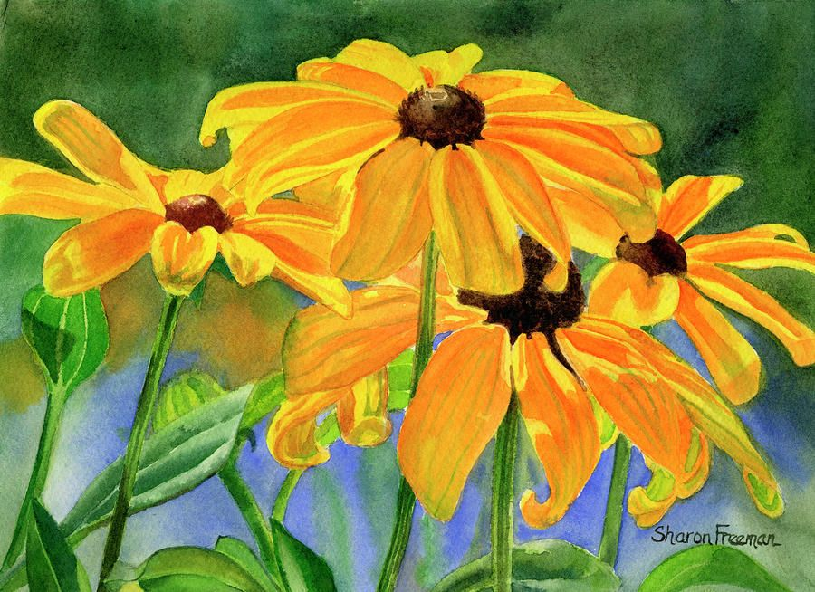 Blackeyed susans painting by sharon freeman blackeyed