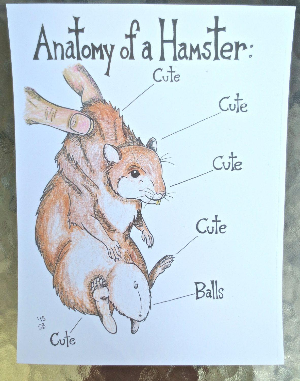 Hamster, Art, Print, Anatomy, Artwork, Illustration, Humor, Mouse ...