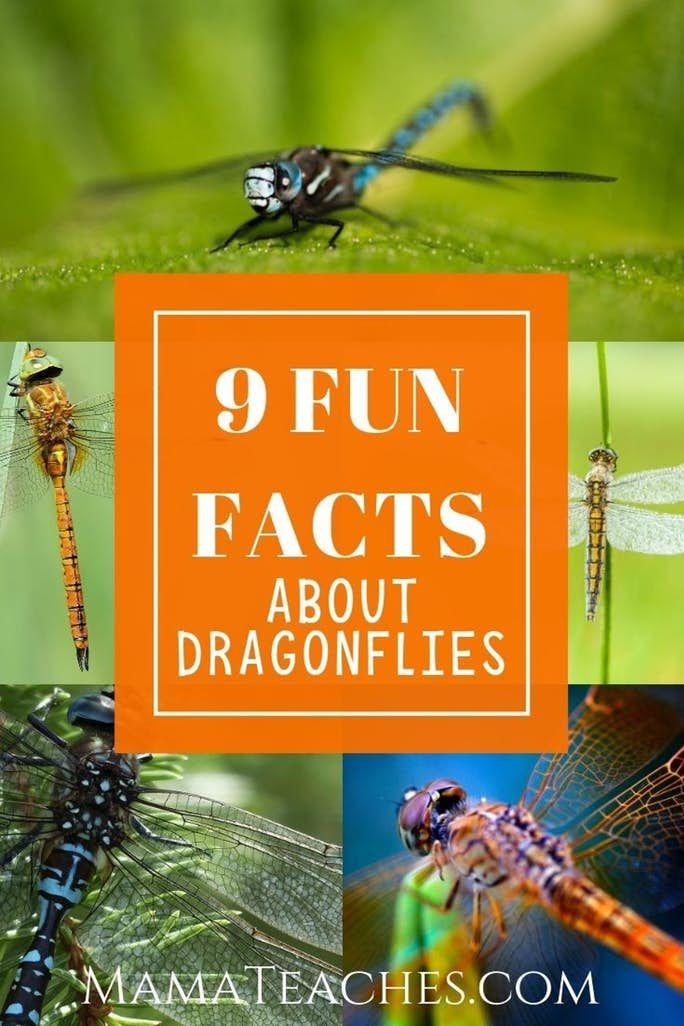 Dragonfly Worksheets Kindergarten