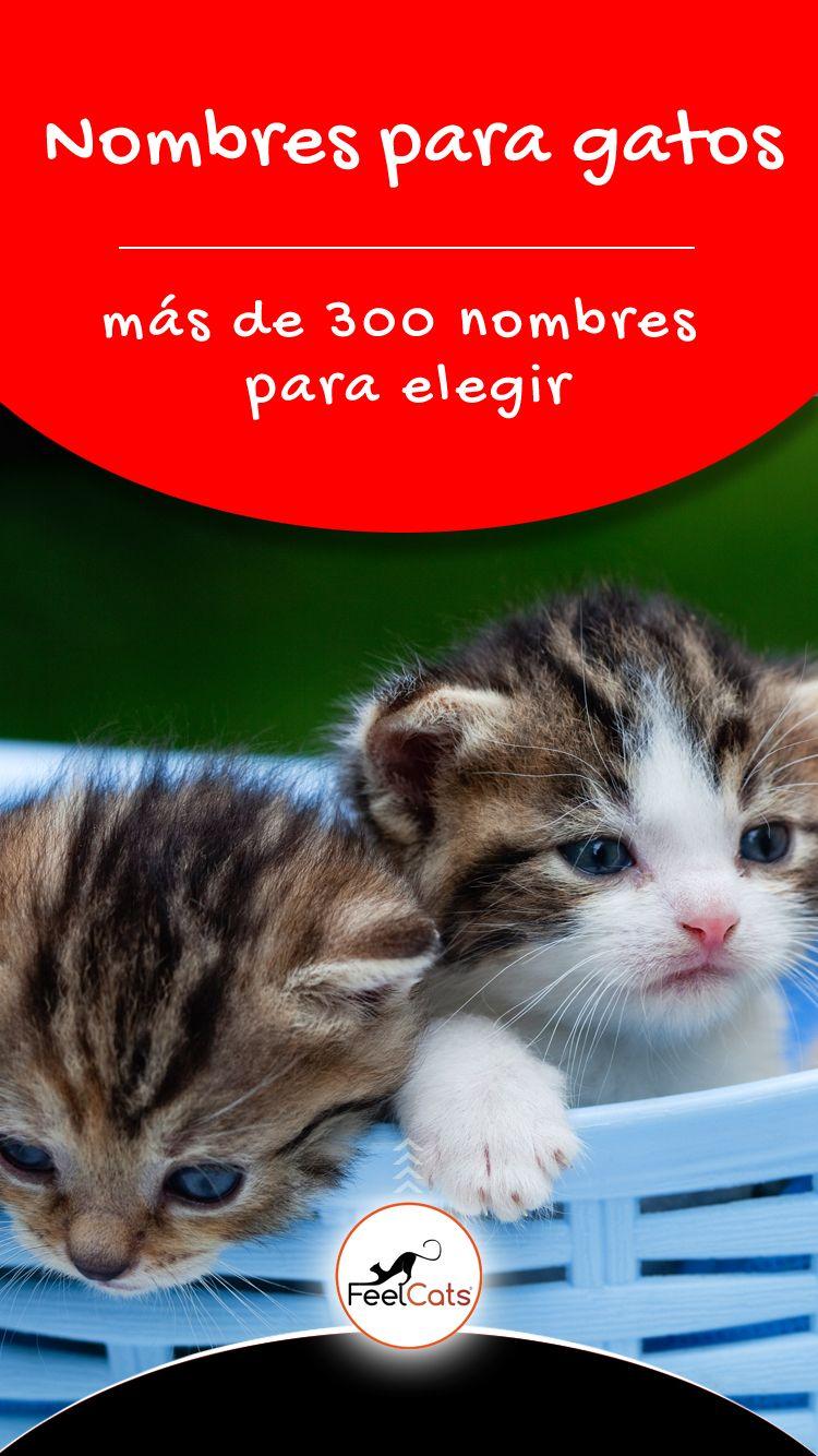 Top 100 Nombres Para Gatos Más Bonitos Y Originales Feelcats Nombres Para Gatas Nombres Para Gato Macho Nombres Para Gatos Grises