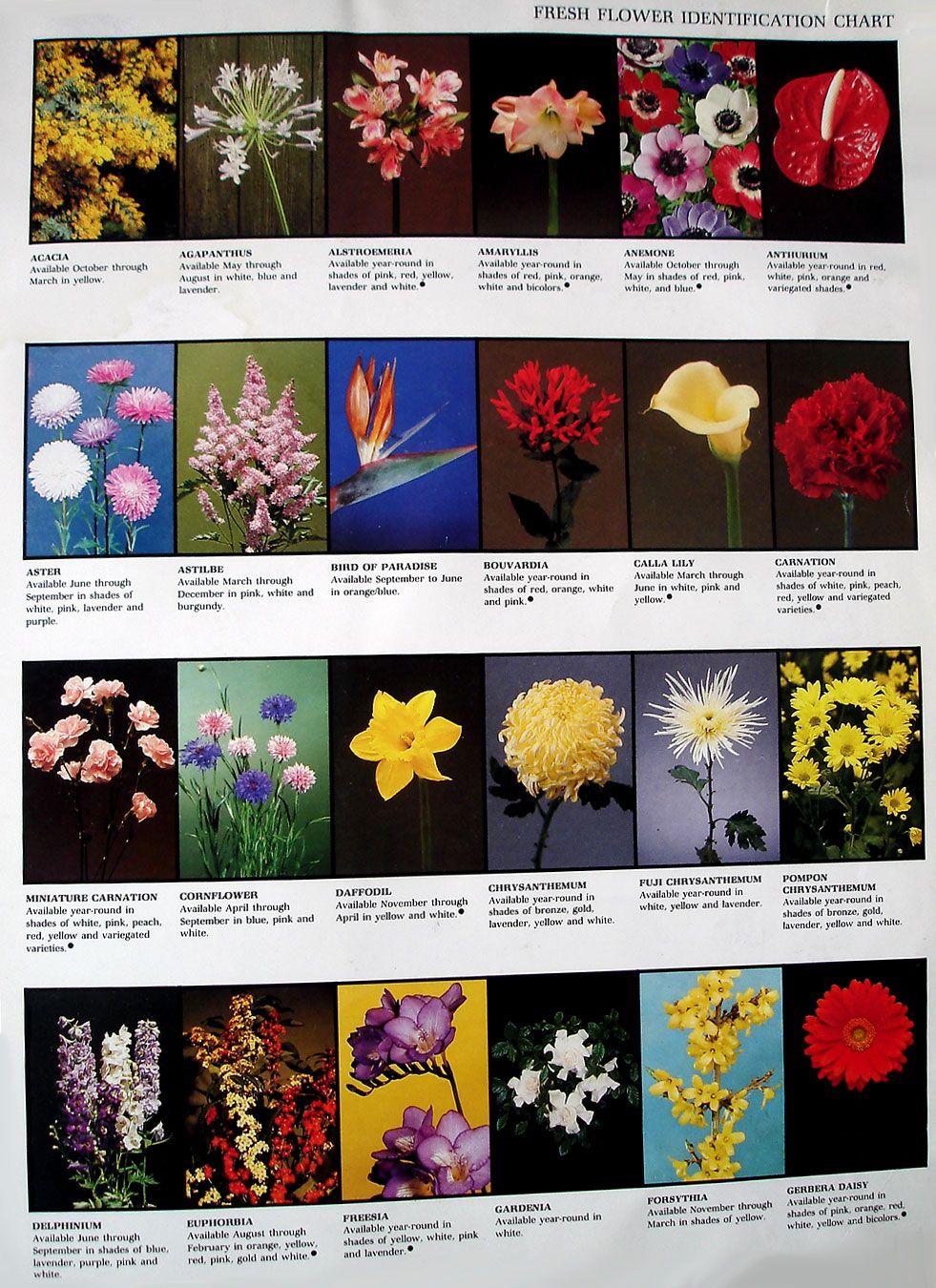 Flower Chart (With images) Flower chart, Flower garden