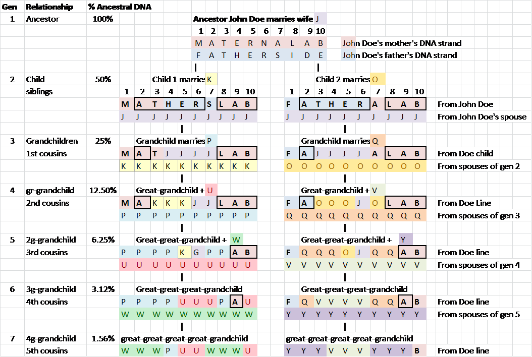 Concepts – How Your Autosomal DNA Identifies Your Ancestors