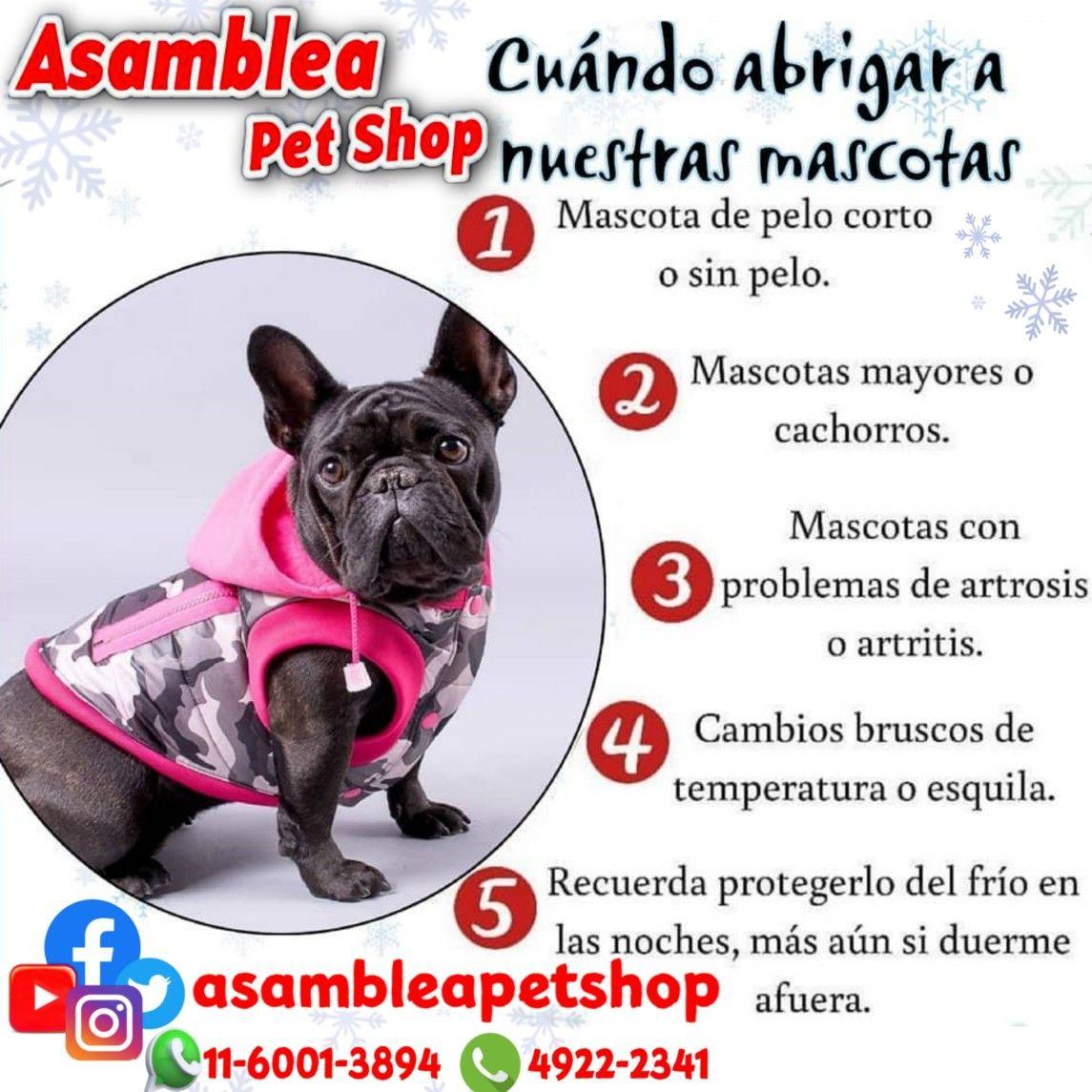 La Piel Es El Protector Natural Del Perro Frente A Agentes Externos Por Eso Es Importante Cuidar Su Salud Para Que E Articulos Para Mascotas Mascotas Cachorros