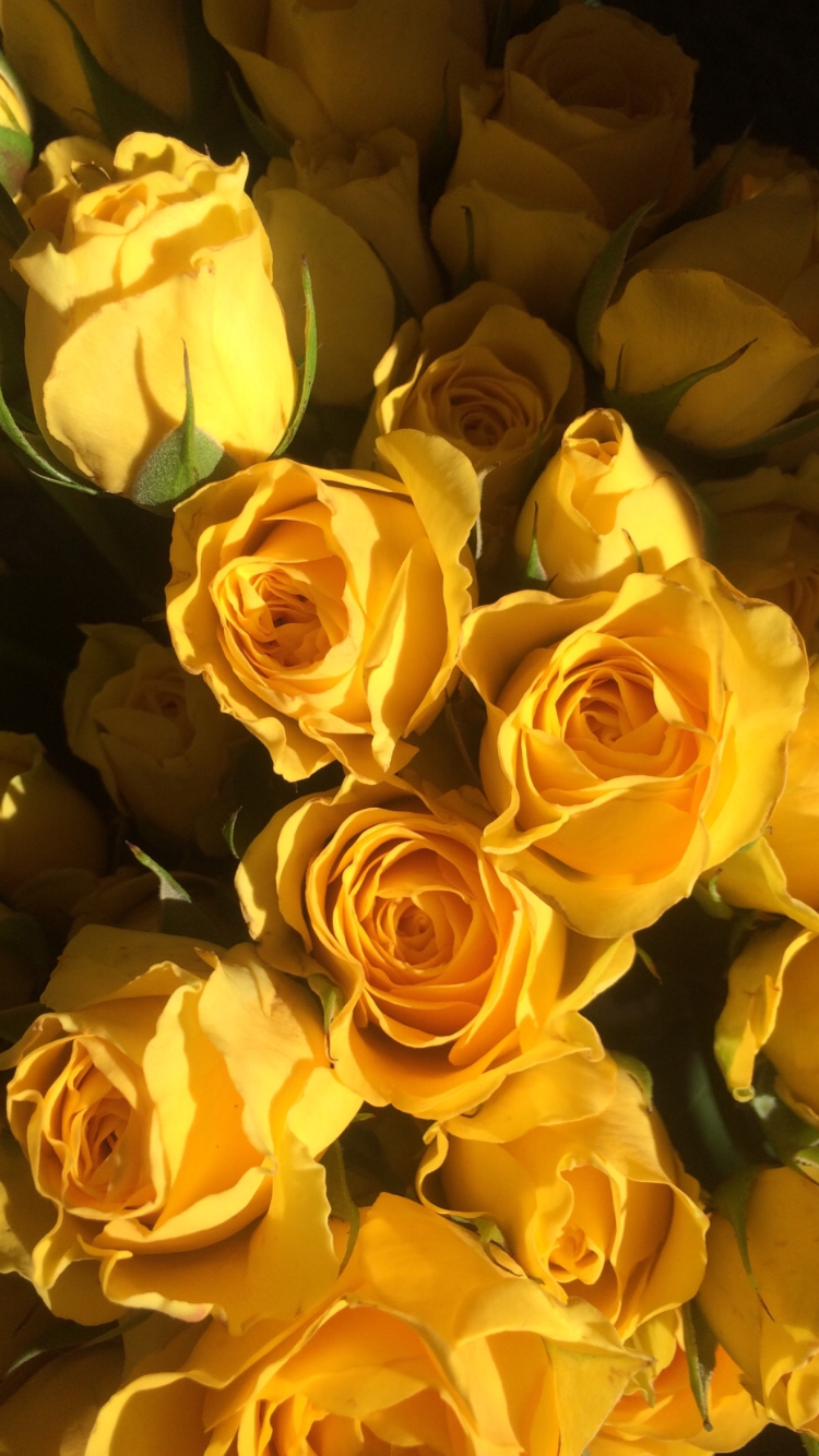 Pin by jekaterina bezdele on wallpaper pinterest wallpaper flowers for a pretty girl izmirmasajfo