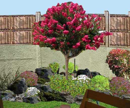 El cresp n destaca por su incre ble follaje de tonos for Jardines naturales pequenos
