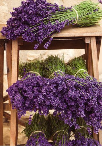 Provence lavendar, never tire of the heavenly scent.