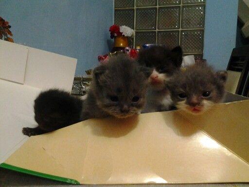 My kitti,,welcome,,,