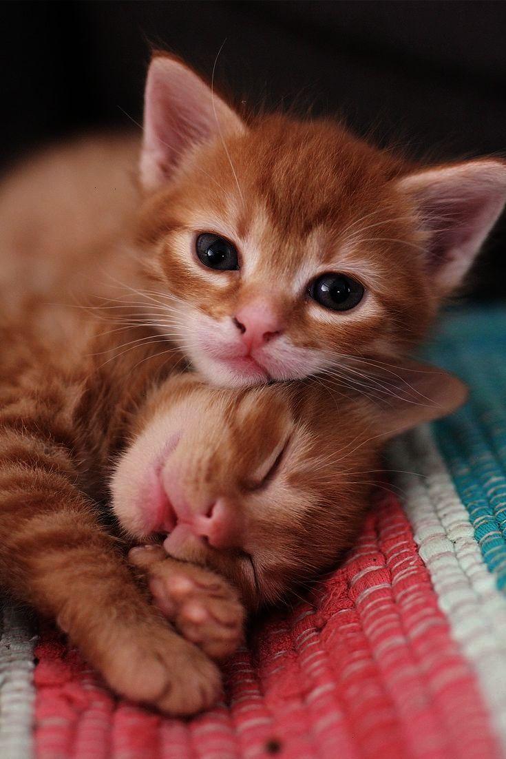 Astounding Cute Cats For Sale Uk D Kittens Cutest Cute Cats