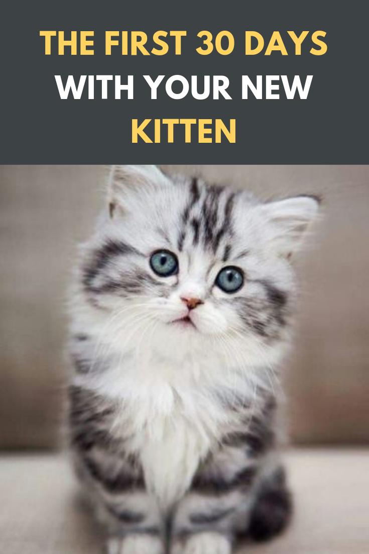 The First 30 Days With Your New Kitten Cats Cat Catsofinstagram Of Catstagram Beautifulcats Pets Catlover Pet Insta Kitten Breeds Kitten Care Kitten