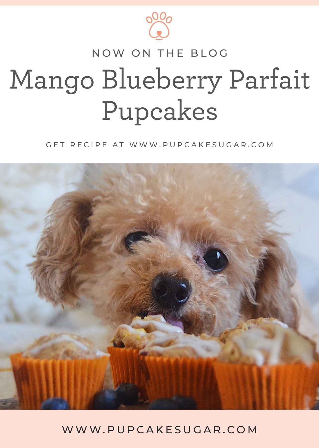 Sugar Catches Spring Fever Celebrates With These Mango Blueberry Parfait Pupcakes Diy Dog Treats