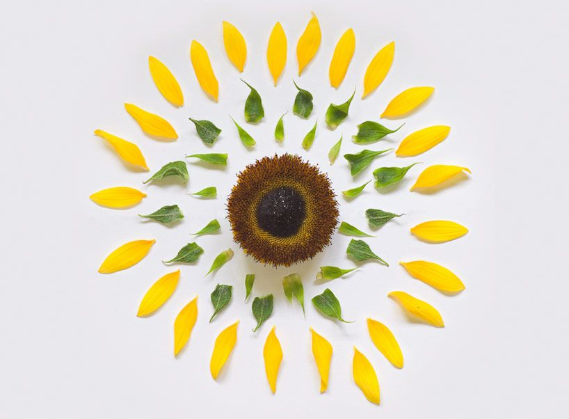 Exploded Flowers By Fong Qi Wei Sunflower Flowers Flower Power