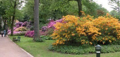 Rhododendron und Azaleen im Rhododendronpark Bremen