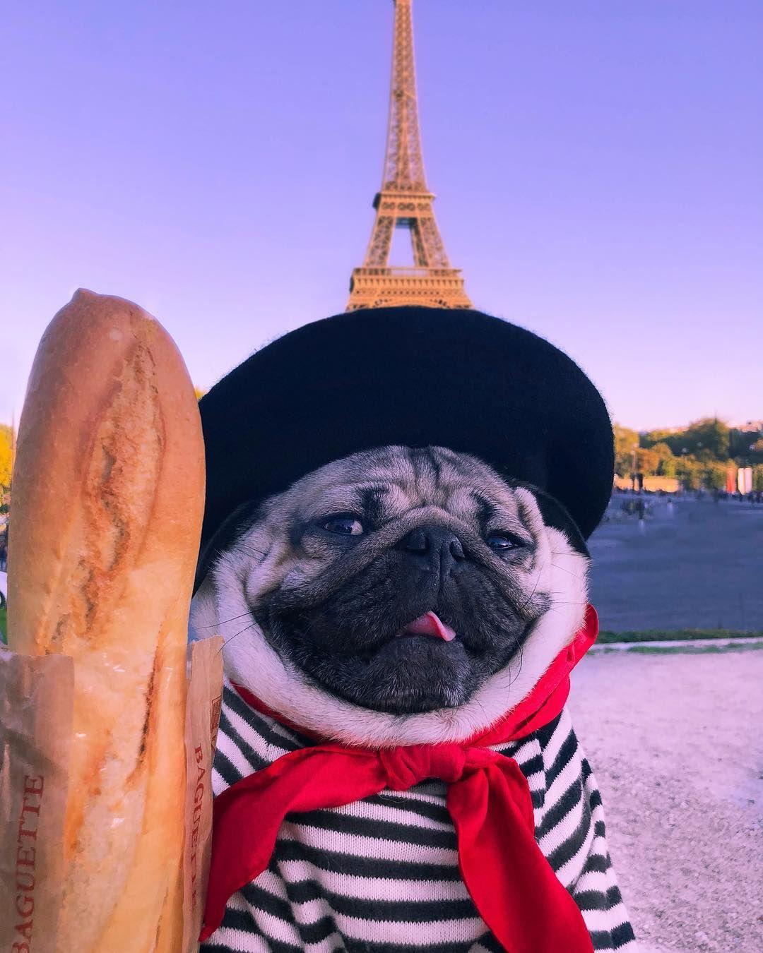 Doug The Pug On Instagram We Go Together Like Romance And Carbs