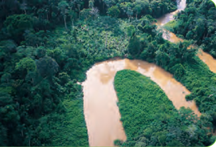 Amazonia Bosques De Tierra Firme Bosques Inundados E Inundables Country Roads Road Ccnn