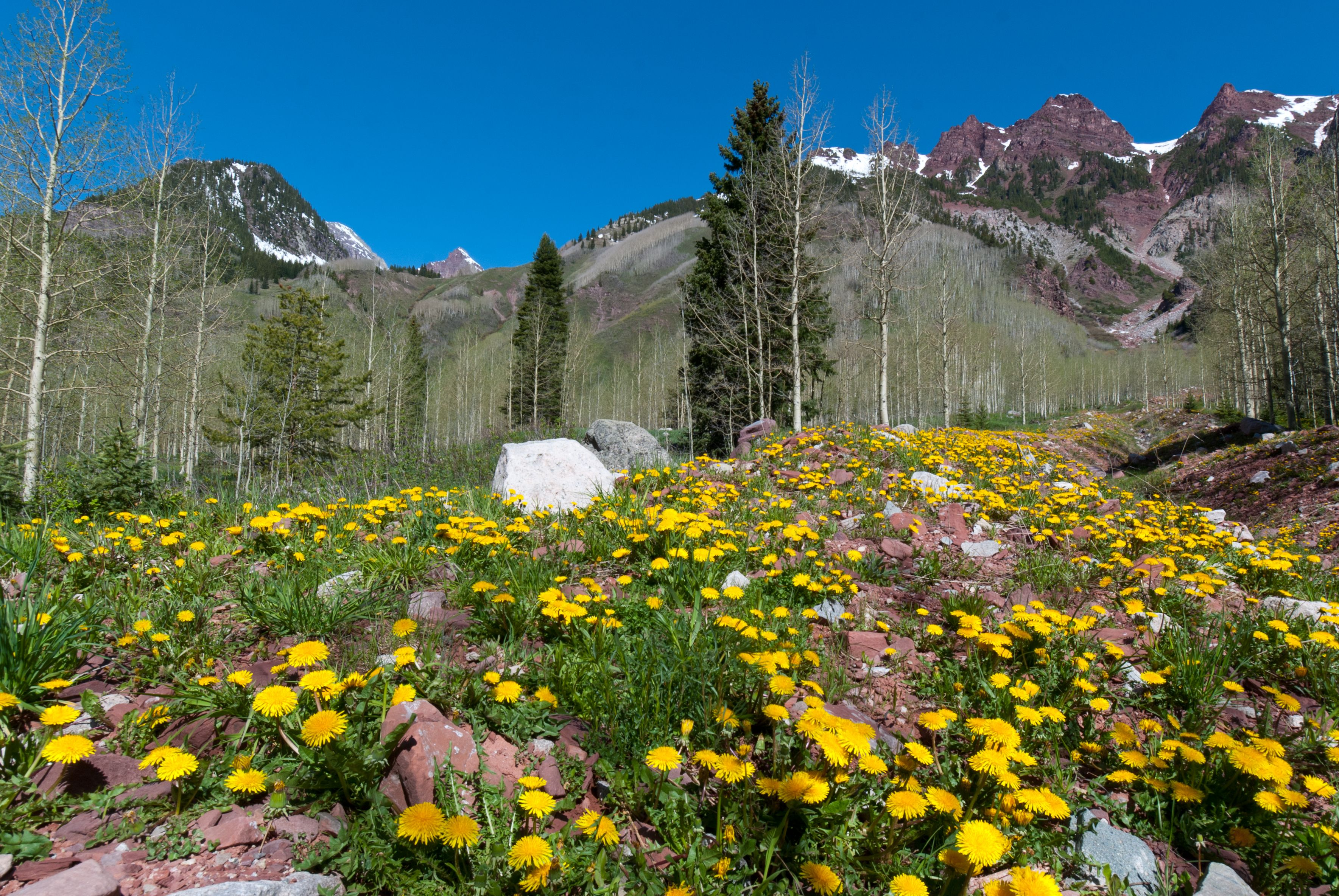 Spring Rocky Mountain Landscape A Photograph By Lynn Cyrus Cascade Colors Believe It Or Not Given My Mul Mountain Landscape Colorado Landscape Mountains