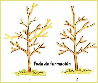 Cuales son los diferentes tipos de podas en los arboles for Cuales son los tipos de arboles