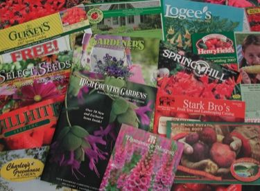 Garden Catalogs Gardening Group Board Pinterest
