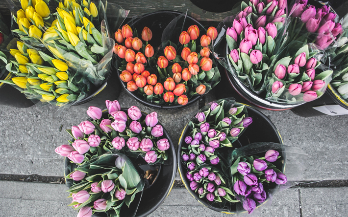 Download Wallpapers Tulips, Showcase Of A Flower Shop