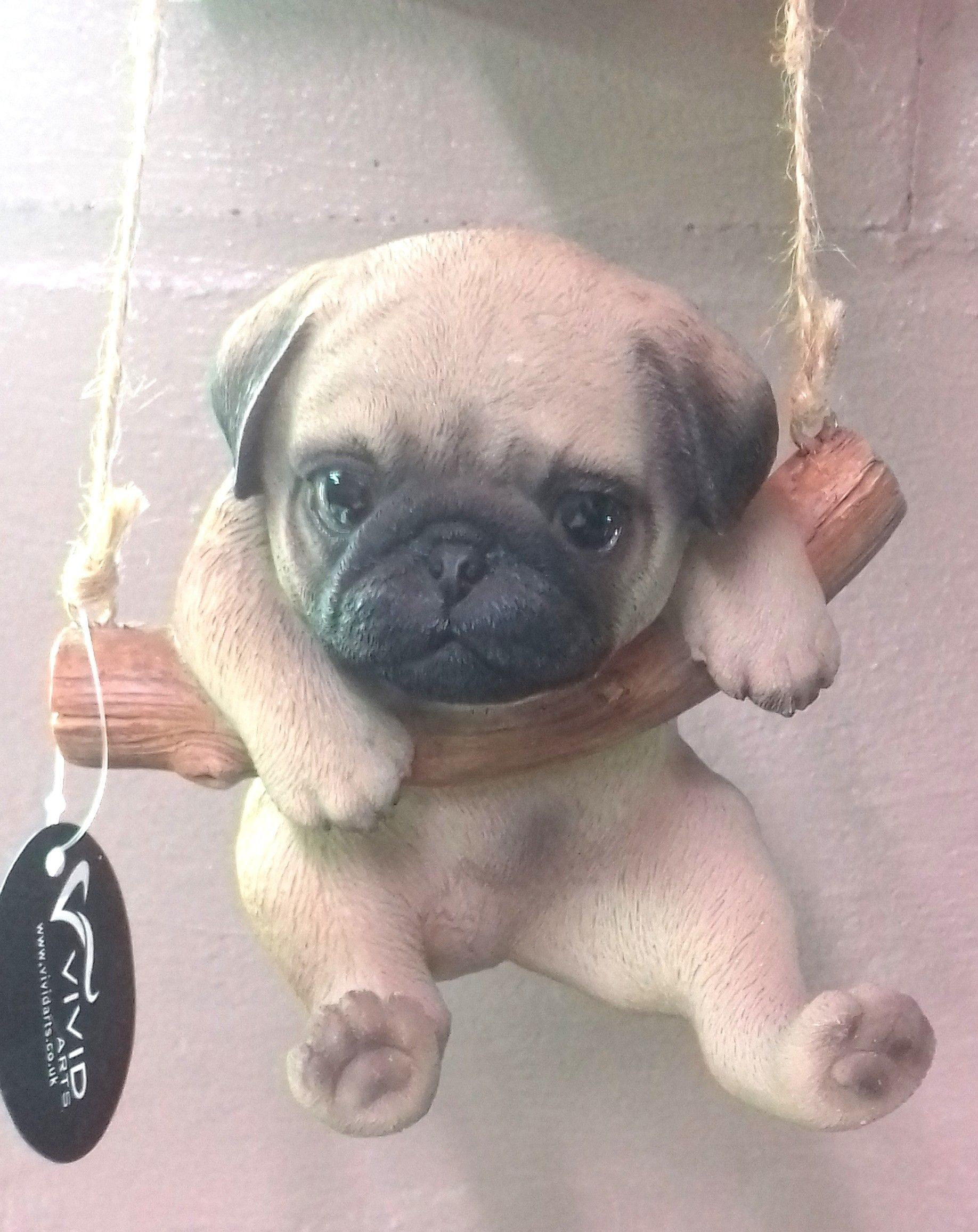 Rocking Pug So Adorable Dog Dogs Doglovers Cute Beautiful
