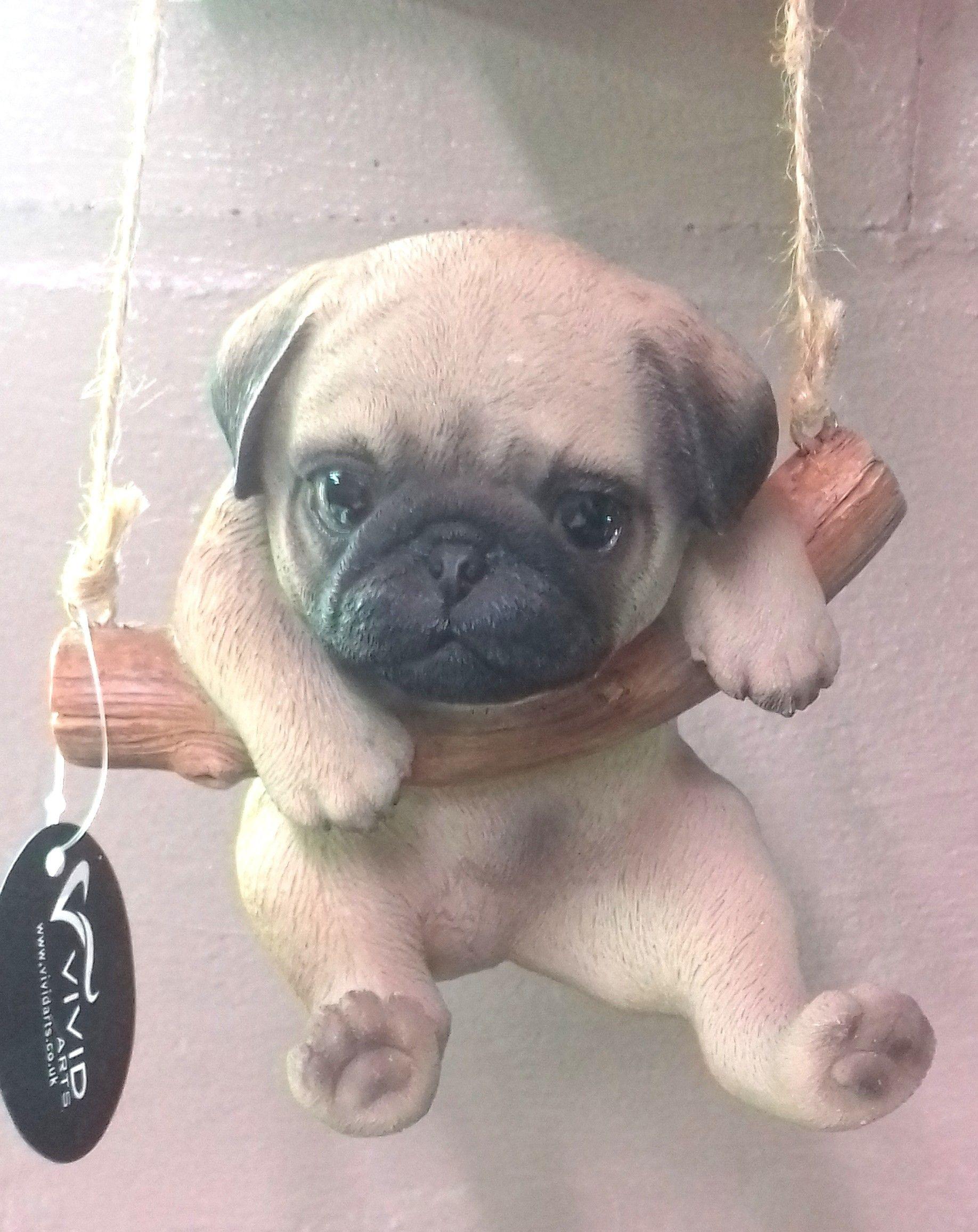 Tiny Baby Pugs : Animals