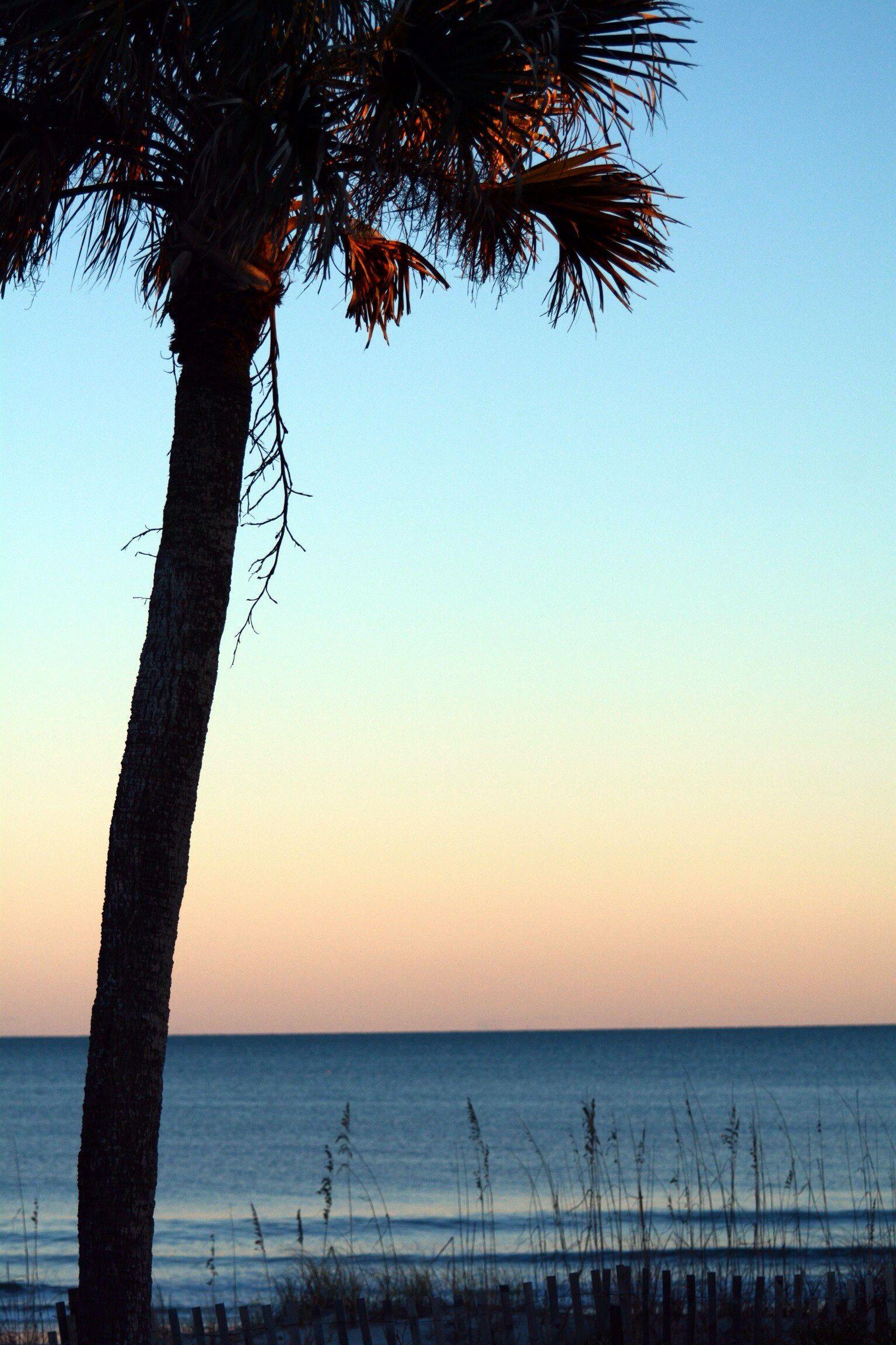 Myrtle Beach Ocean Palm Tree Photography