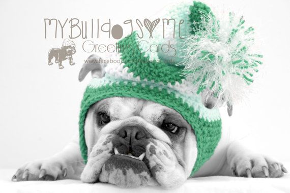 Card 39 Snow Day English Bulldog Christmas Greeting Card Sleeping Puppies Bulldog Puppies Fur Babies