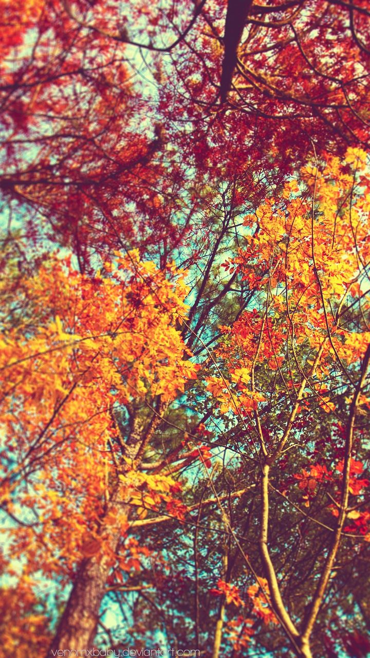Beautiful Orange Leaves Trees Iphone Wallpaper Tree Wallpaper Iphone Flower Iphone Wallpaper Iphone 6 Wallpaper
