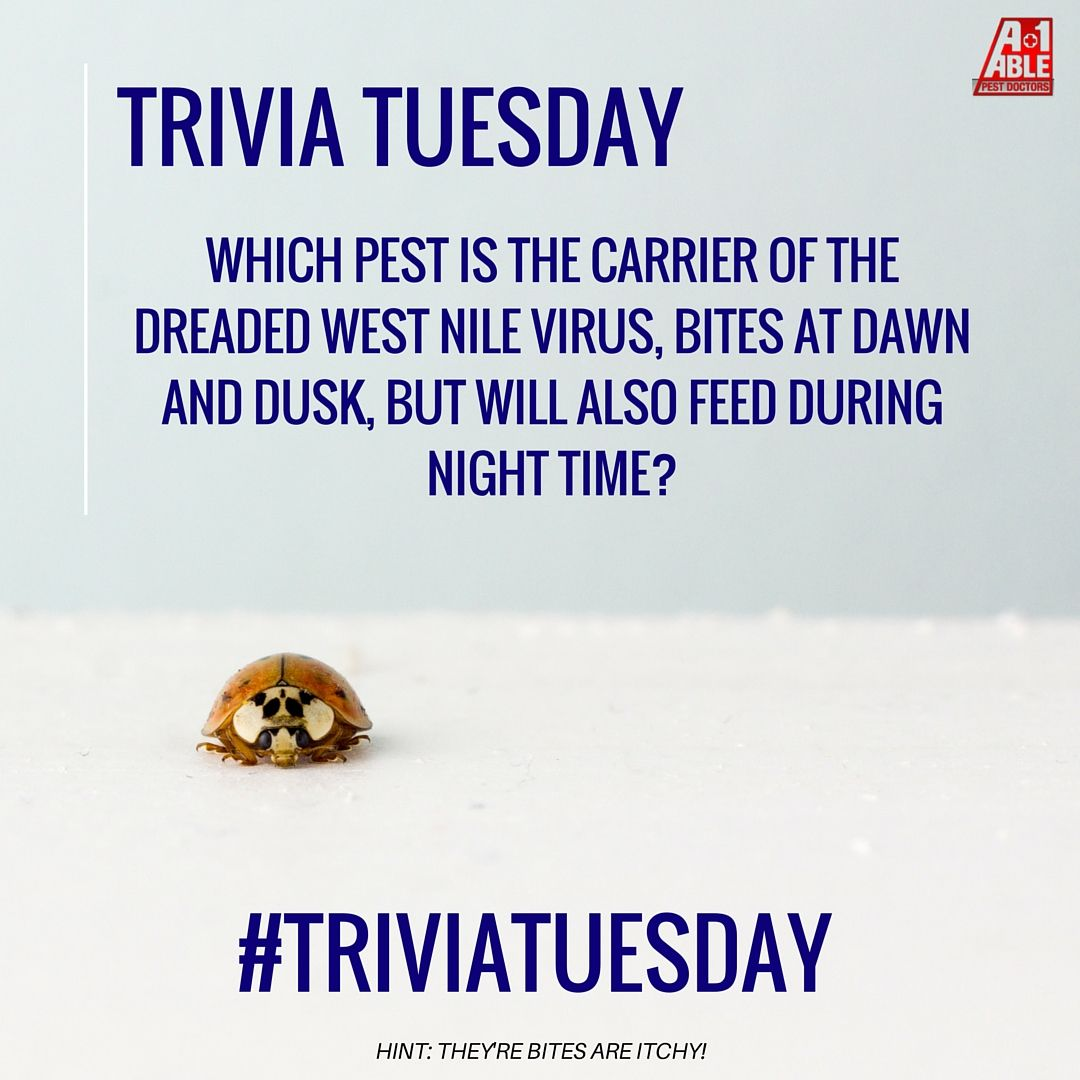 Trivia Tuesday Image By A1 Able Pest Doctors