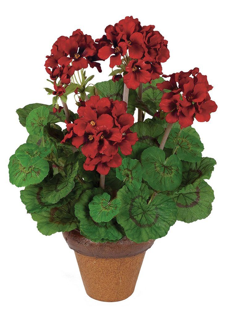 Indoor Outdoor Red Silk Geranium Potted Plant 16 Tall 400 x 300