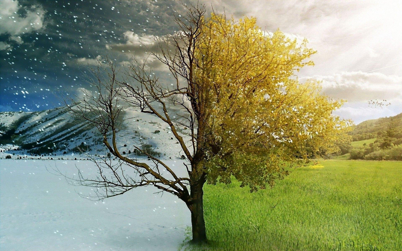5791 Tree Between Two Seasons Winter And Spring Jpg 2880 1800