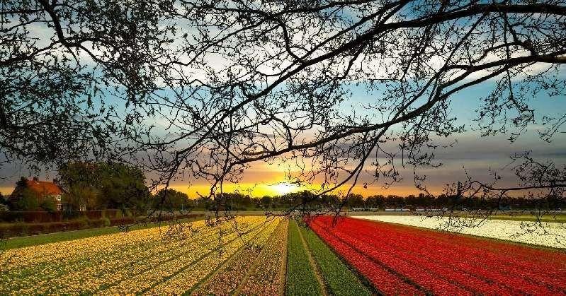 Paling Hits 30 Gambar Pemandangan Bunga Tulip Di Belanda Dari Berbagai Jenis Bunga Anggrek Kebanyakan Yang Ada Adalah Warna Di 2020 Pemandangan Bunga Tulip Haarlem