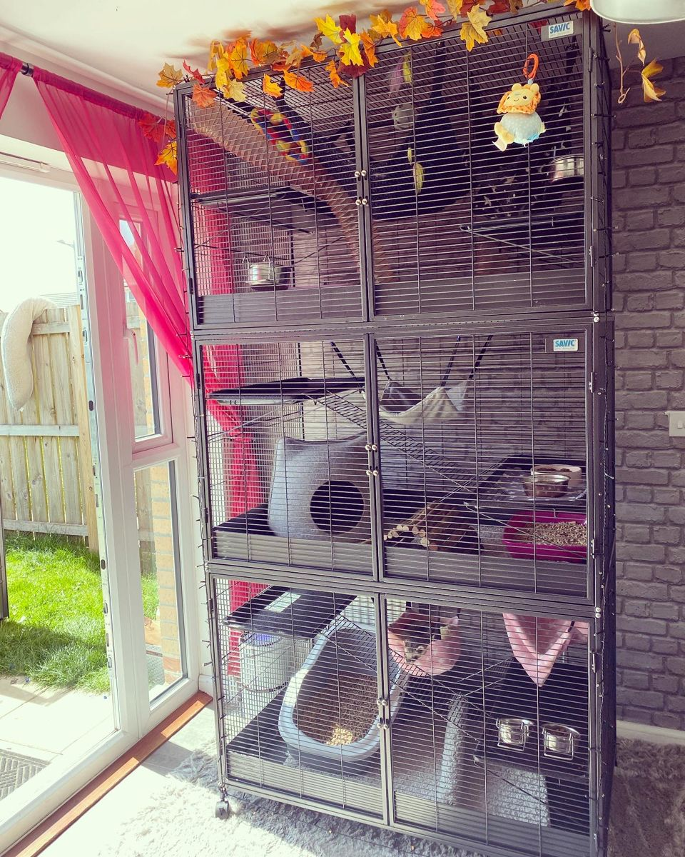 Triple Ferret Cage Made From 2 Savic Suite Royal Xl Cages Ramp Liners Knee High Socks Are In The Wash In 2020 Ferret Cage Pet Ferret Pet Enclosure
