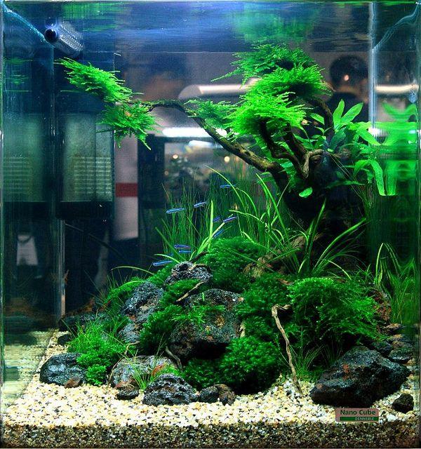 What To Do With A Cube Aquarium Landscape Aquascape Aquascape Aquarium