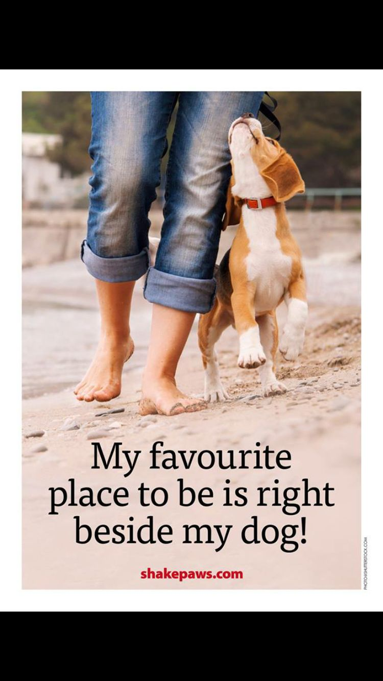 Very true!! Pet sitting jobs, Dog quotes, Dogs