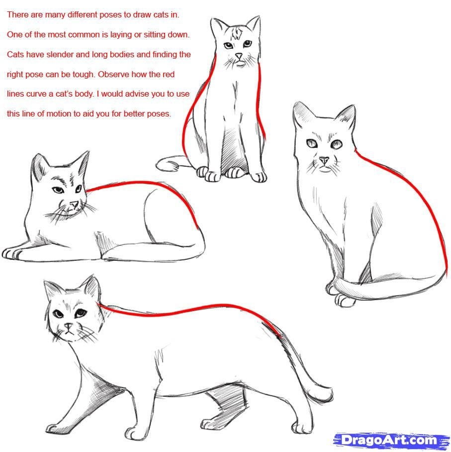 How To Draw A Realistic Cat Draw Real Cat By Dawn Warrior Cat