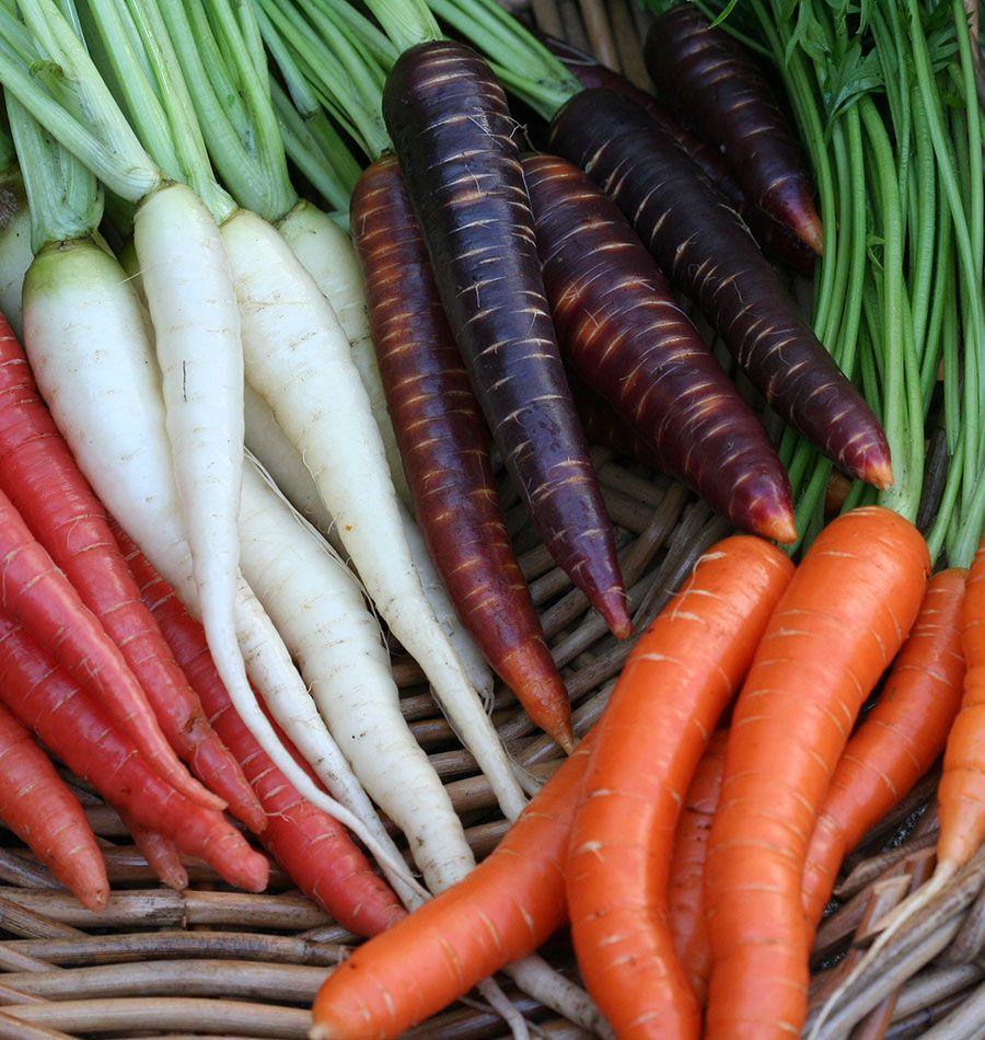 How to Store Carrots in 2020 How to store carrots