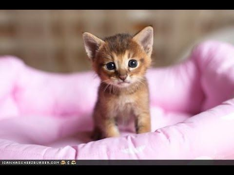 Youtube Kittens Cutest Kittens Cutest Baby Cute Animals