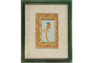Manuscript, Orange Long-Tailed Bird