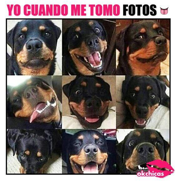 20 Divertidos Memes De Perros Que Te Haran Llorar De Risa Memes Perros Memes De Perros Chistosos Memes De Animales Divertidos
