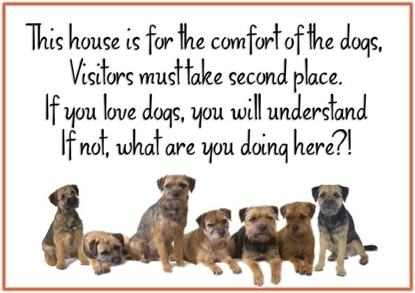 Border Terrier Border Terrier Terrier Sign Cute Cats And Dogs