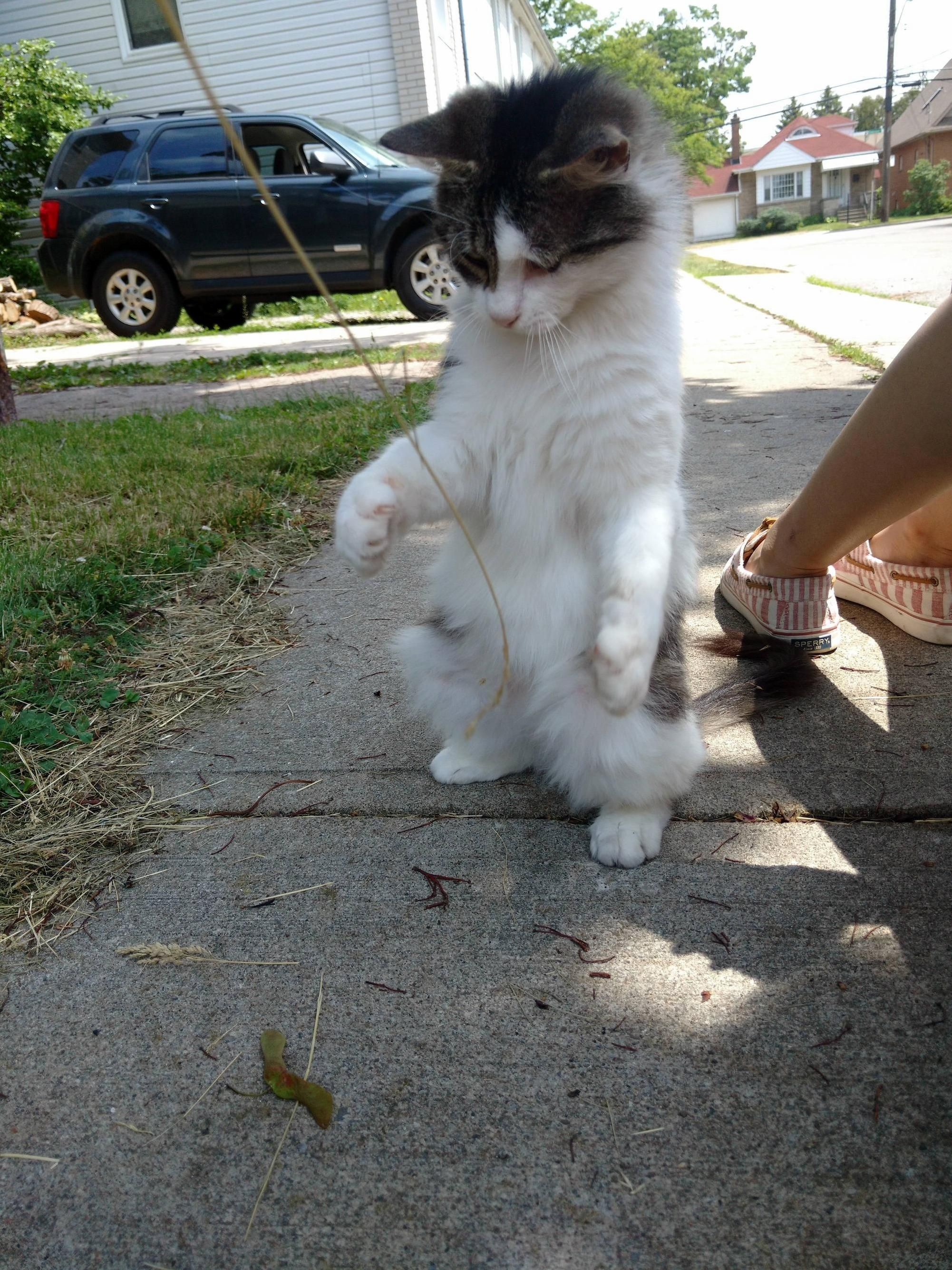This is scrappycat. shes a pal from my neighborhood - http://cutecatshq.com/cats/this-is-scrappycat-shes-a-pal-from-my-neighborhood/