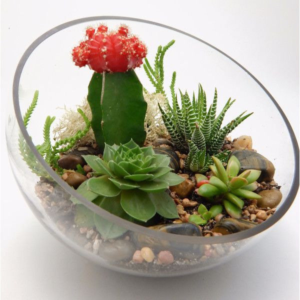 Cactus Succulent Half Moon Glass Terrarium (1 190 UAH) ❤ Liked On Polyvore  Featuring Home, Home Decor, Floral Decor, Cactus Terrarium, Glass Terrarium,  ...