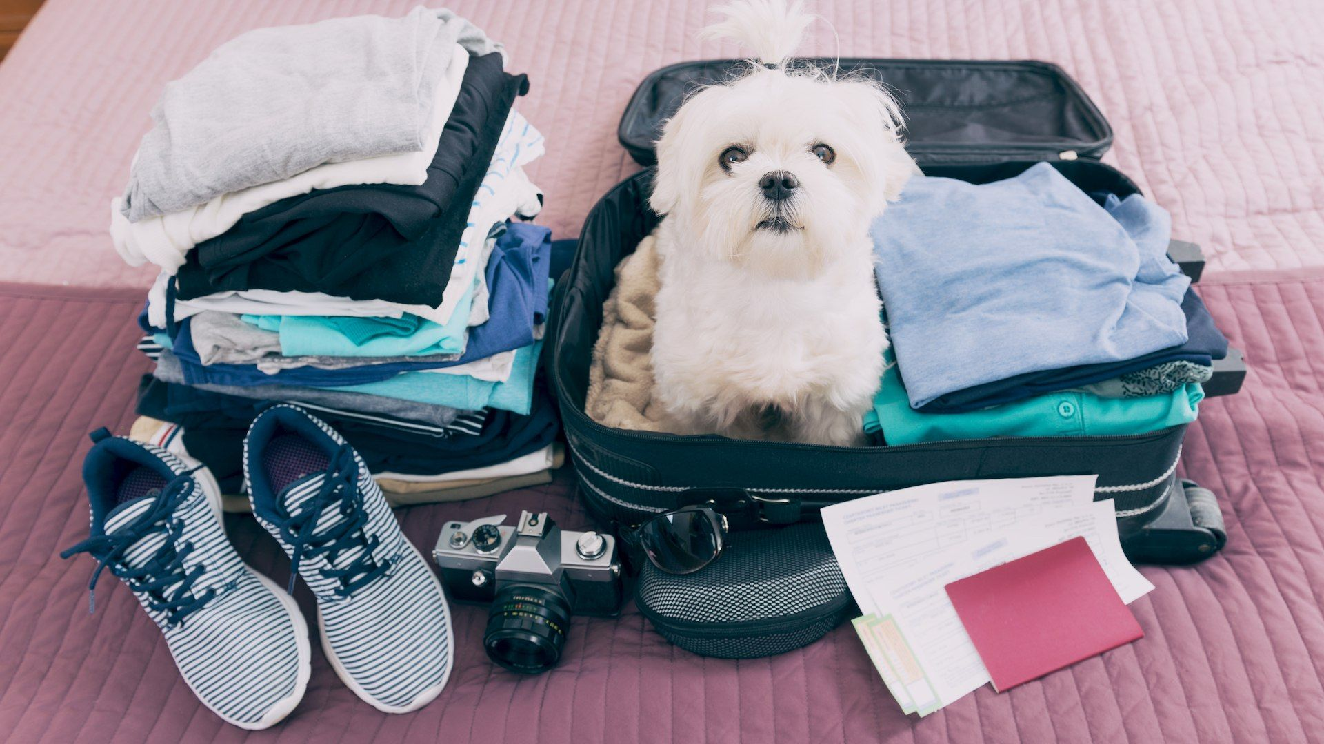 Before You Head To The Airport With Your Pet, Make
