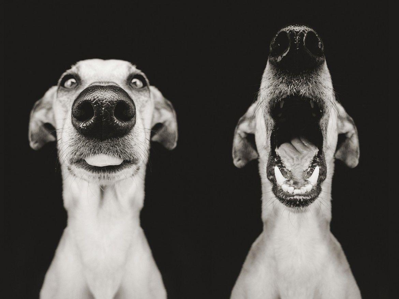 Смешные картинки животных черно белые