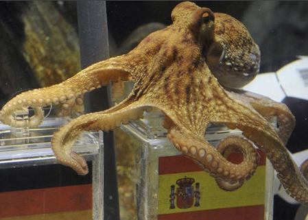 Paul The Octopus Dies Rip World Cup Oracle Paul The Octopus Octopus Cats That Dont Shed