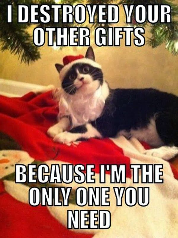 I want it all!   Christmas memes funny, Funny cats, Funny ...