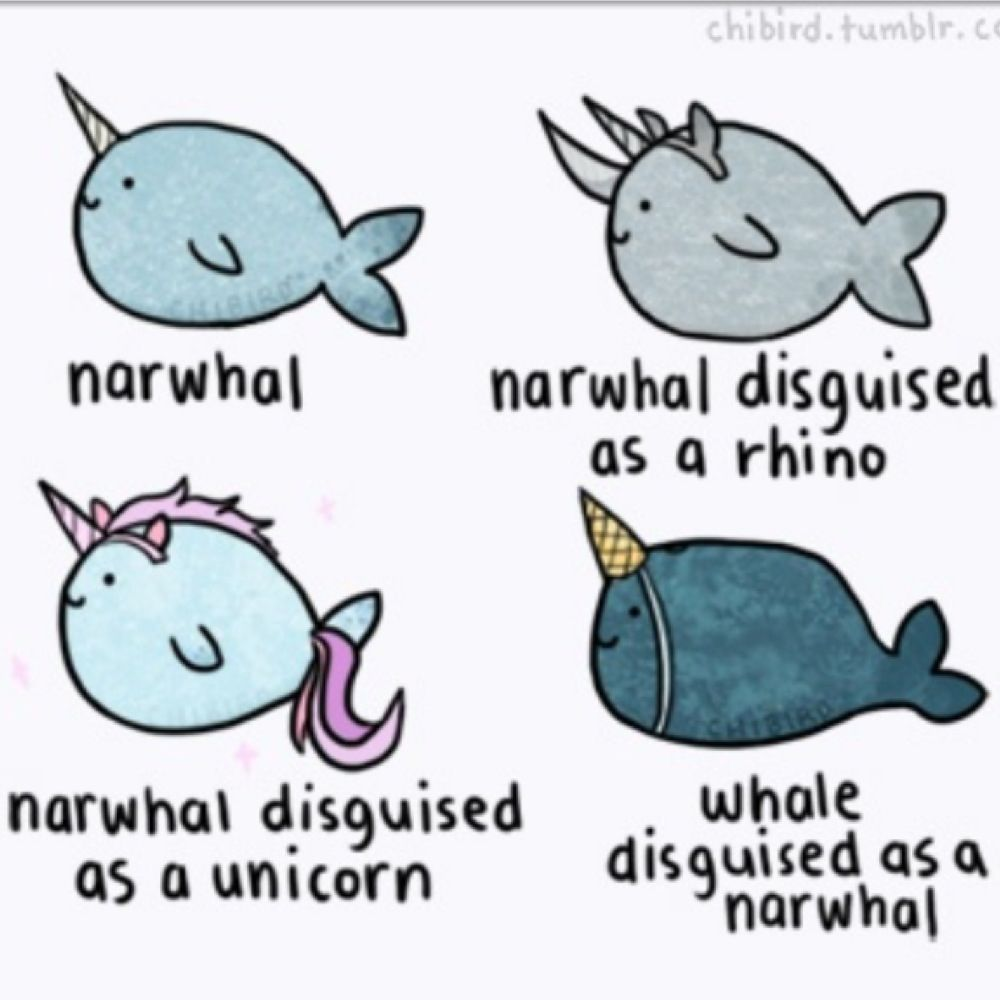Narwhal and unicorn cartoon narwhal jokes funny pictures - Narwhal Disguised As A